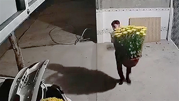 Camera ghi lại người đàn ông đi ôtô trộm hoa Tết