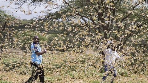 Quái vật kinh hoàng tấn công, cả châu Phi sống lo sợ