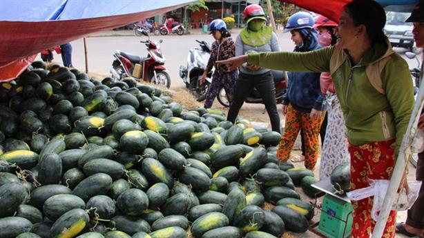Kịch bản cứu nông sản khi dịch corona kéo dài