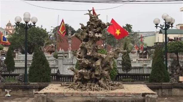 Cục củi khô Nam Điền 4 tỷ chấn động Hà Nội