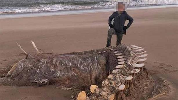 Xương quái vật khổng lồ dạt vào bờ: Tranh luận lớn