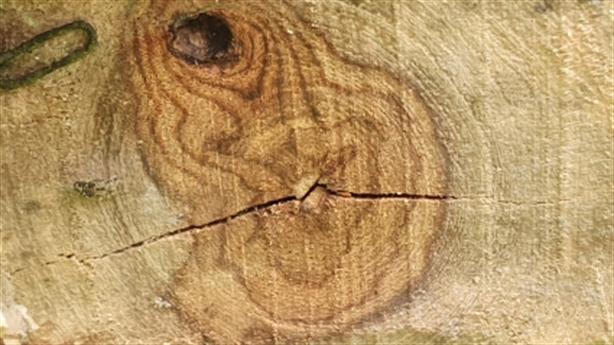 Mâu thuẫn vụ bán 2 cây gỗ sưa ở Hoằng Hóa