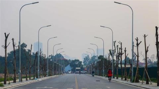 Hàng trăm cây sấu chết khô trên đường Hà Nội: Khó hiểu!