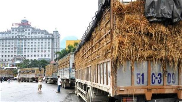 Nông sản sang Trung Quốc, Việt Nam có nắm quyền chủ động?