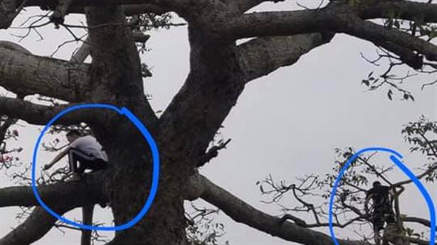 Cây gạo trăm tuổi bị bẻ toang: Vì yêu phim, yêu cây