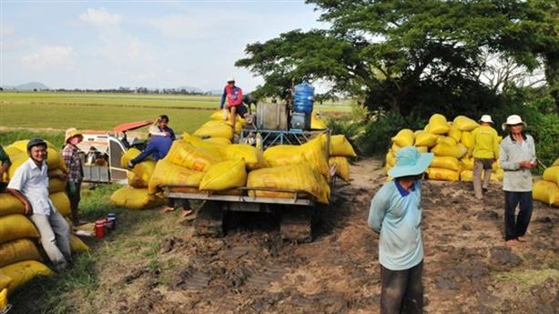 Lúa không thiếu, mong sớm có giải pháp xuất khẩu gạo