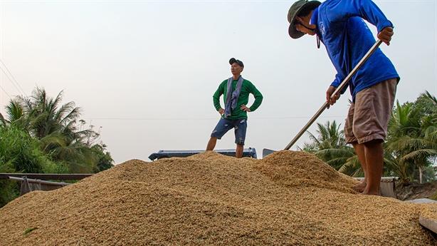 GS Võ Tòng Xuân: Gạo Việt Nam đang được mua giá cao