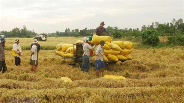 Cân nhắc xuất khẩu gạo: Phải nghĩ đến nông dân!