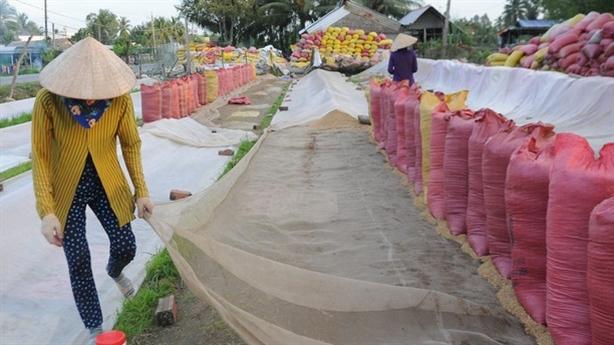 Bộ Nông nghiệp kiến nghị tiếp tục xuất khẩu gạo nếp