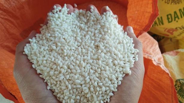 Gạo nếp không thuộc an ninh lương thực, xin xuất tiếp