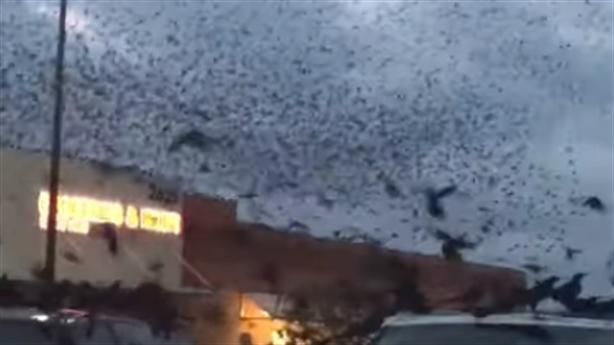 Mỹ căng mình chống dịch COVID-19, hốt hoảng thấy đàn chim đen