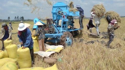 Đề xuất FDI phân phối gạo thị trường nội địa: Khó xử