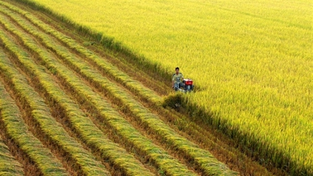 Đề xuất FDI phân phối gạo thị trường nội: Chỉ trước mắt