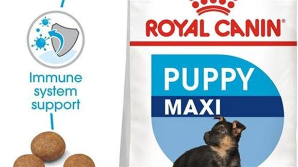 Thức ăn cho chó mua ở đâu uy tín tại TPHCM?