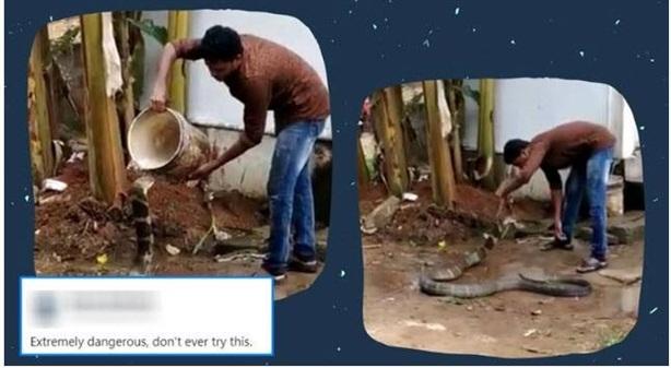 Thanh niên tắm cho hổ mang chúa dài 3m