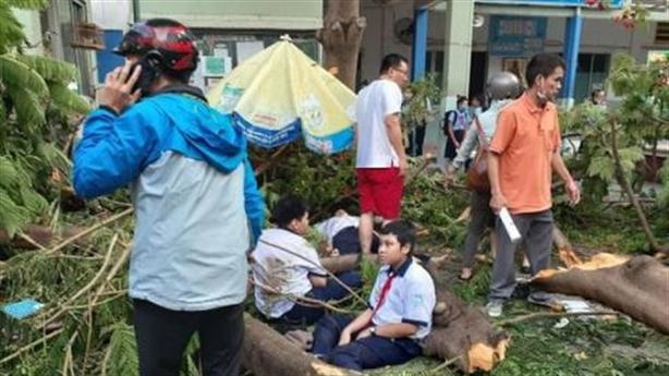 Cây phượng đổ, đè chết học sinh: Rõ trách nhiệm quản lý
