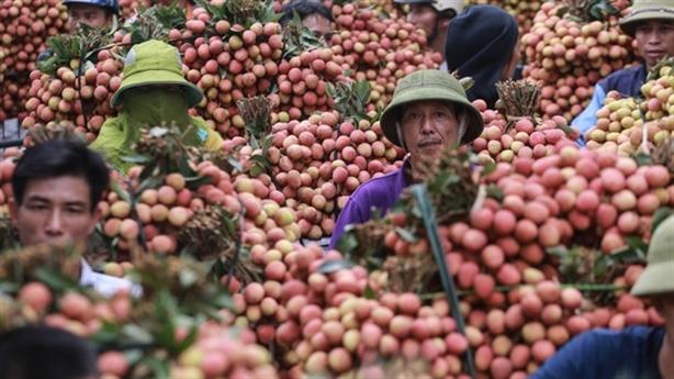 Nông sản Việt và thị trường Trung Quốc: Không tranh thủ là...dại