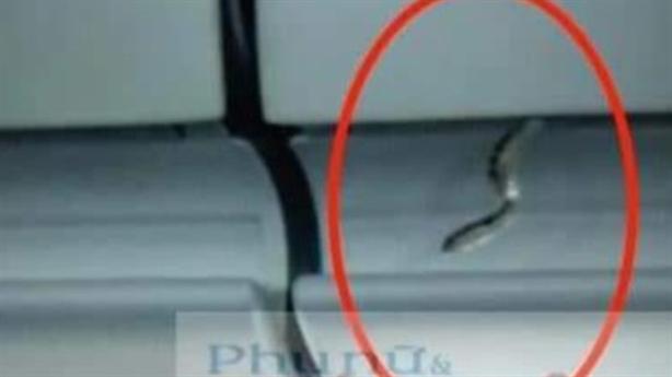 Xuất hiện rắn trên máy bay Vietjet: 'Không phải rắn độc'