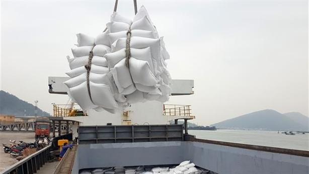 Gạo Việt được mua giá cao, khó bỏ thị trường Trung Quốc
