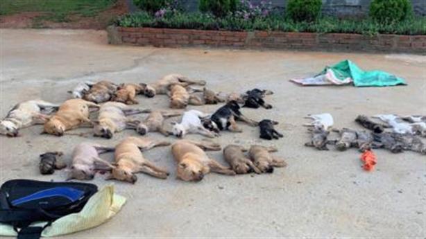 Ăn thịt chó bị đánh bả xyanua: Ảnh hưởng sau này