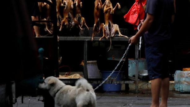 Trung Quốc vẫn khai hội thịt chó lớn nhất trong năm