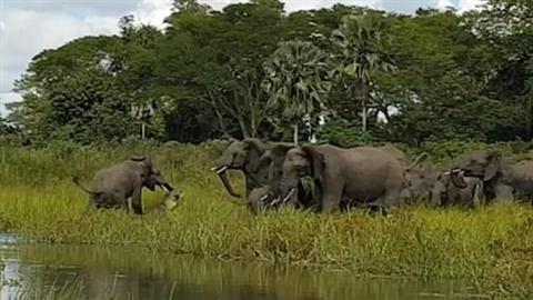 Phục kích săn voi, cá sấu nhận trái đắng
