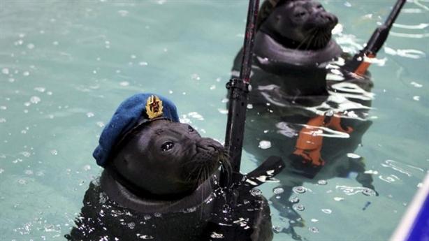 Chiến binh hải cẩu, cá heo bắt đầu bảo vệ cảng Tartus