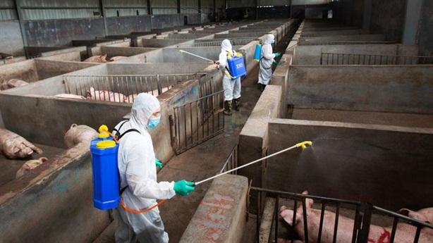 Chủng cúm lợn mới ở Trung Quốc: Việt Nam đừng lơ là