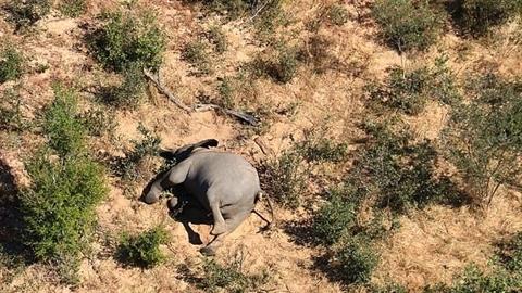 Thảm họa voi chết hàng loạt ở châu Phi
