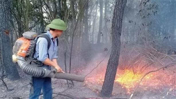 Cháy rừng thông: Người phụ nữ ra bìa rừng đốt rác