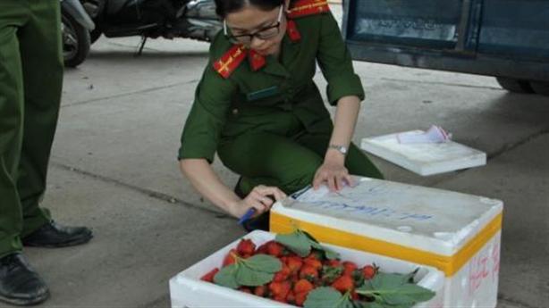 Bắt 3,5 tấn dâu tây nghi của TQ đưa lên Đà Lạt