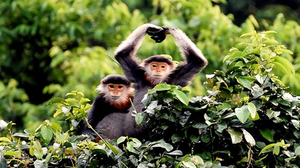 Trung tâm GreenViet nỗ lực bảo tồn loài động vật nguy cấp
