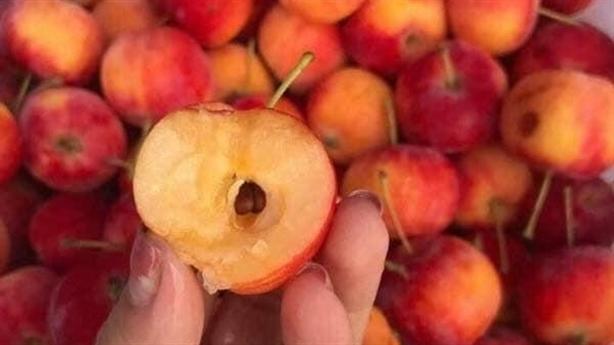 Táo cherry bán đầy rẫy chợ mạng: 'Không quan trọng nguồn gốc'