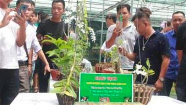 Công an tỉnh Bình Phước: Có nhóm thổi giá lan đột biến
