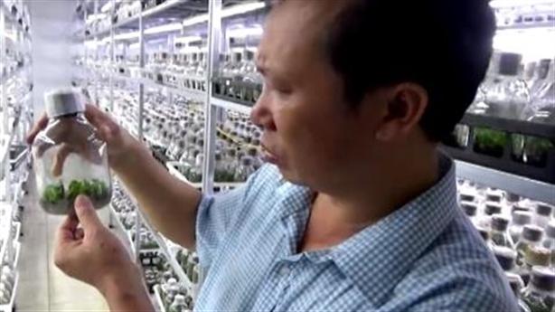 Thêm đơn vị Bộ Nông nghiệp xuất bán phi điệp cấy mô