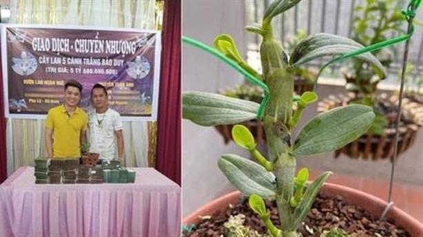 Hội SVC Việt Nam cảnh báo nóng lan đột biến tiền tỷ
