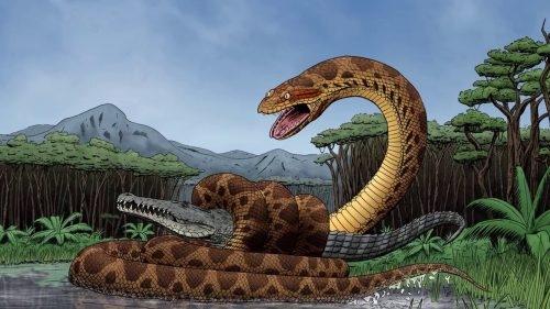 Trăn khổng lồ nặng hơn tấn, chén cá sấu dễ như chơi