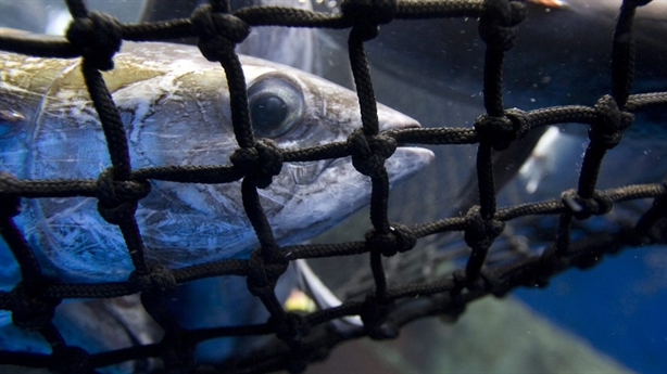 Tàu cá vét cạn đại dương: Trung Quốc khủng hoảng hình ảnh