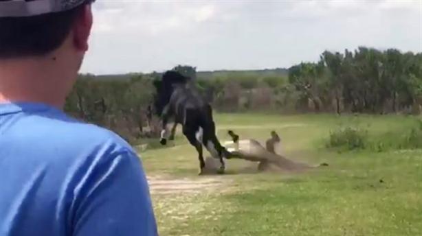 Cá sấu lên bờ bị ngựa hoang ngứa chân cho bài học