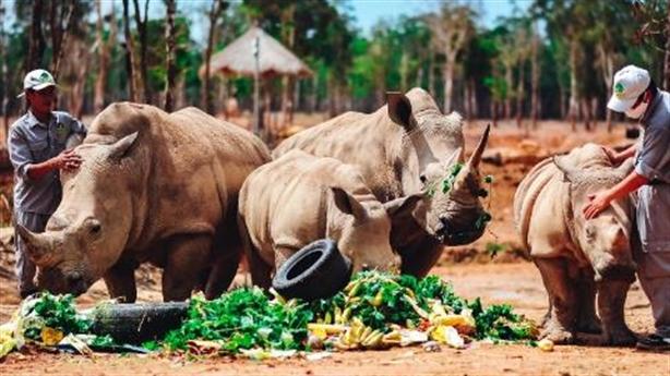 """Gặp gỡ những tê giác con """"quốc tịch Việt"""" ở Vinpearl Safari"""