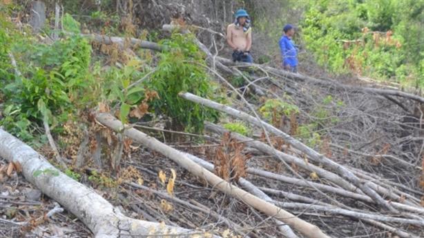 13 cán bộ tham gia phá rừng phòng