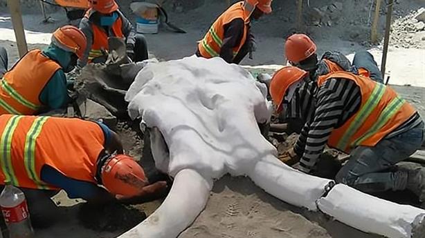 Ảnh hàng chục hóa thạch voi ma mút khổng lồ tại Mexico