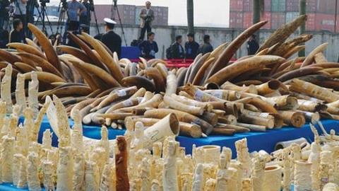Kiện hàng ngà voi bỏ lại sân bay Tân Sơn Nhất