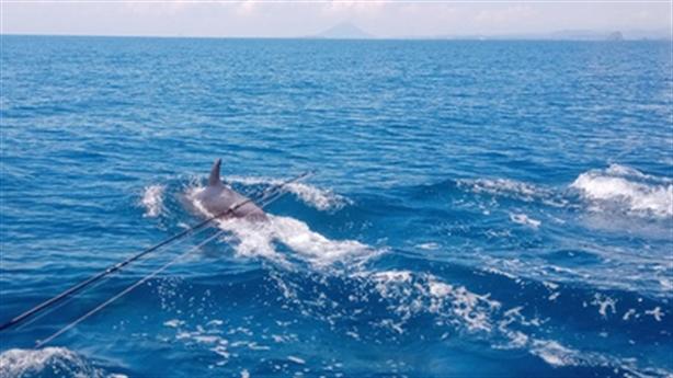 Đàn cá heo xuất hiện ở biển Phú Yên: Biển sạch