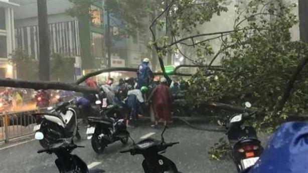 Cao ốc hút gió khiến cây đổ chết người: Dự báo trước