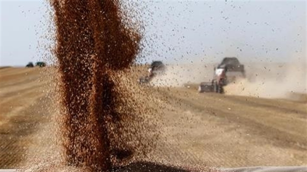 Không phải dầu mỏ mà là lúa mì đã cứu nước Nga