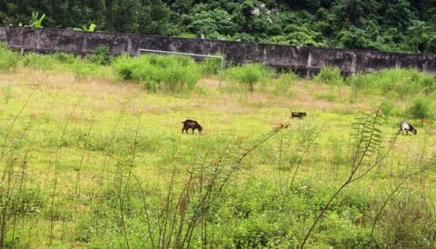 Sân vận đồng tiền tỷ thả trâu, bò: Mất trộm nhiều đồ