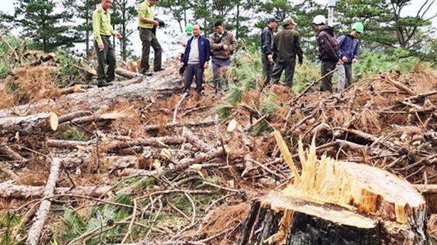 Phạt kẻ đầu độc rừng thông 11 triệu: 'Muốn phạt nặng, nhưng...'
