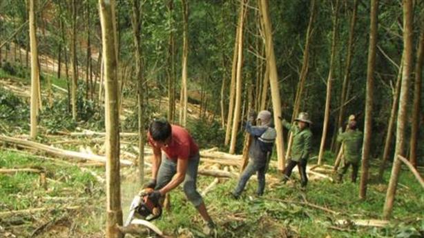 Đổi rừng phòng hộ, rừng tự nhiên lấy hồ thủy lợi?