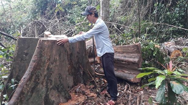 Vì sao rừng nguyên sinh còn nguyên chỉ 0,25%?
